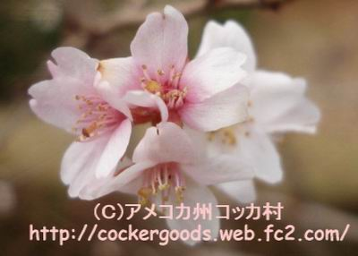 1DSC03194.jpg