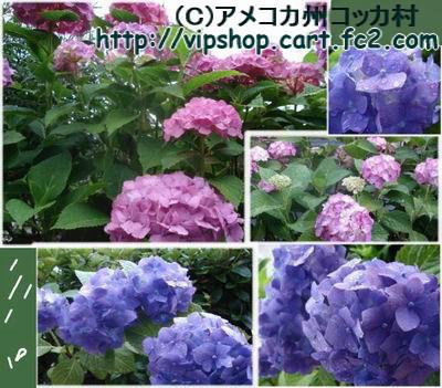 1467421188_239.jpg