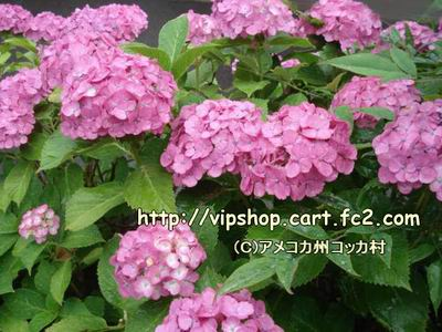 1DSC00715.jpg