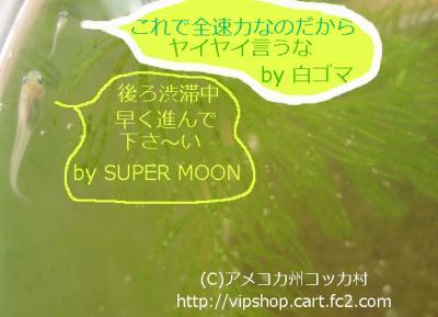 1DSC01270.jpg