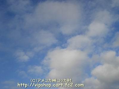 1DSC01441.jpg