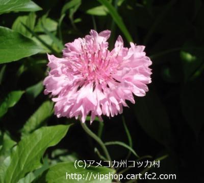 1DSC01648.jpg