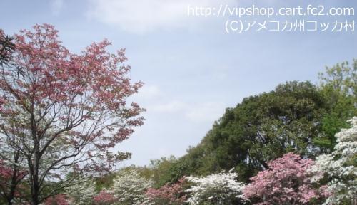 1DSC02011.jpg