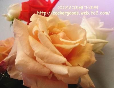 1DSC02362.jpg