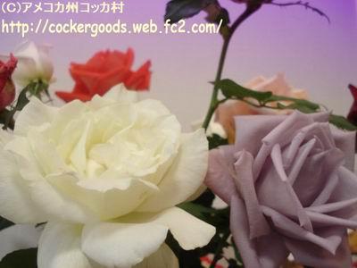 1DSC02363.jpg
