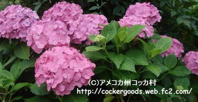 1DSC04992.jpg