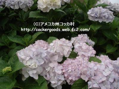 1DSC05018.jpg