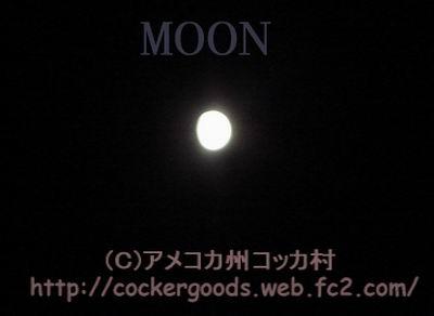 1コピー~ DSC05261.jpg