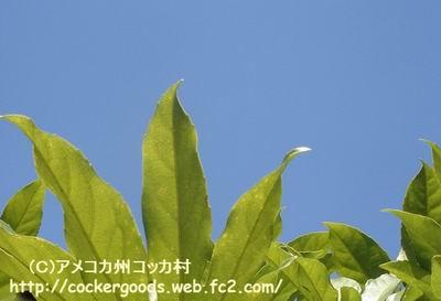 1コピー~ DSC05266.jpg